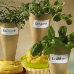 aromatic-spice-herbs-decoration5-2.jpg