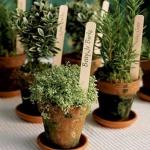 aromatic-spice-herbs-decoration5-3.jpg