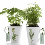 aromatic-spice-herbs-decoration5-4.jpg