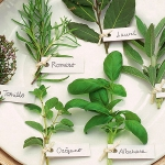 aromatic-spice-herbs-decoration5-5.jpg