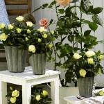 balcony-flowers-ideas1-8.jpg