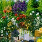 balcony-flowers-ideas3-2.jpg