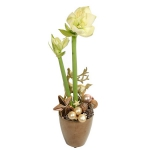 blooming-plants-new-year-decoration3-5