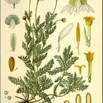 botanical-print-diy-pattern1-1.jpg