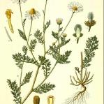 botanical-print-diy-pattern1-2.jpg