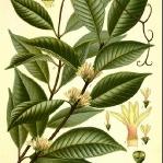 botanical-print-diy-pattern2-1.jpg