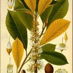 botanical-print-diy-pattern2-2.jpg