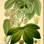 botanical-print-diy-pattern2-3.jpg