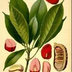 botanical-print-diy-pattern3-2.jpg