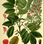 botanical-print-diy-pattern3-3.jpg