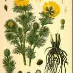 botanical-print-diy-pattern4-1.jpg