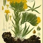 botanical-print-diy-pattern4-3.jpg
