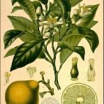 botanical-print-diy-pattern5-1.jpg