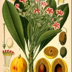 botanical-print-diy-pattern5-2.jpg