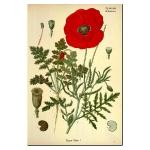 botanical-print-ideas-diy2.jpg