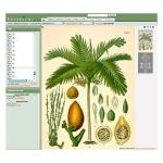 botanical-print-ideas-diy3.jpg
