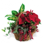 christmas-poinsettia-combo10.jpg
