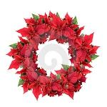 christmas-poinsettia-combo6.jpg