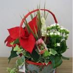 christmas-poinsettia-combo7.jpg
