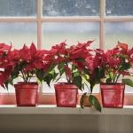 christmas-windows-decoration-windowsill11.jpg