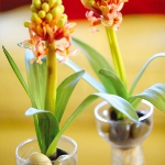color-vitamins-for-livingroom5-4.jpg
