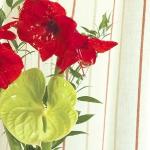 color-vitamins-for-livingroom5-6.jpg