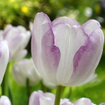 combo-frosted-purple-and-white-flowers2.jpg