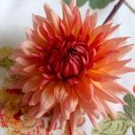dahlias-bouquets-details1-2.jpg