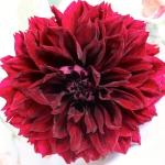 dahlias-bouquets-details1-3.jpg