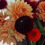dahlias-bouquets-details2-4.jpg