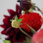 dahlias-bouquets-details2-5.jpg