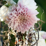 dahlias-bouquets-in-different-shades1-7.jpg