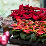 diy-christmas-poinsettia-centerpiece1-materials1.jpg