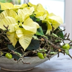 diy-christmas-poinsettia-centerpiece2-5.jpg