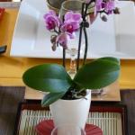 east-style-table-set3-2.jpg