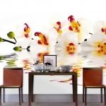 floral-realistic-photo-murals2-7.jpg