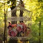 flowers-in-bird-cages-ideas1-2-1.jpg
