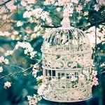 flowers-in-bird-cages-ideas1-2-4.jpg