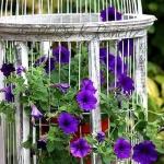flowers-in-bird-cages-ideas1-2-5.jpg