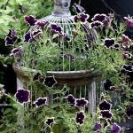 flowers-in-bird-cages-ideas2-4-2.jpg
