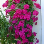 flowers-on-balcony-details2.jpg