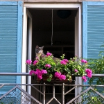 flowers-on-balcony-railing3-1.jpg