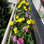 flowers-on-balcony-railing4-3.jpg