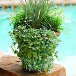 garden-flowers-mix-in-container1-2.jpg