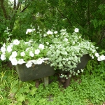 garden-flowers-mix-in-container2-2.jpg