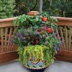 garden-flowers-mix-in-container3-4.jpg