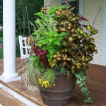 garden-flowers-mix-in-container4-1.jpg