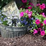 garden-flowers-mix-in-container5-2.jpg