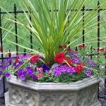 garden-flowers-mix-in-container6-1.jpg