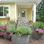 garden-flowers-mix-in-container6-3.jpg